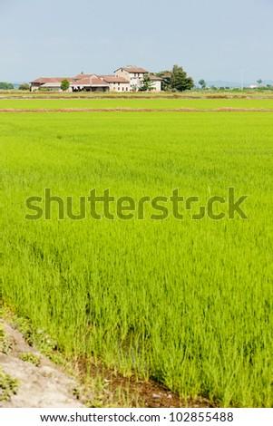 rice field, Piedmont, Italy - stock photo