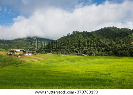 Rice field terrace with farmer house in Chiang Mai, North of Thailand
