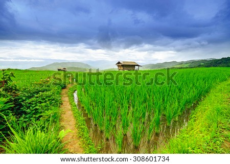 Rice field terraces at Mae chaem village, Chiangmai province, Thailand