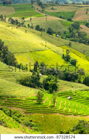 Rice field terraces  in Chiangmai province,North of Thailand