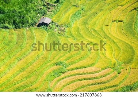 Rice field terraces in Sapa - Lao cai - Viet Nam