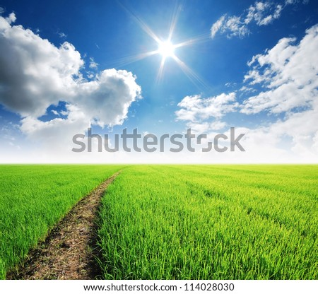 Rice field way on the green field background cloud cloudy lawn - stock photo