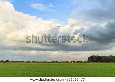 Rice field with beautiful sky, Thailand.