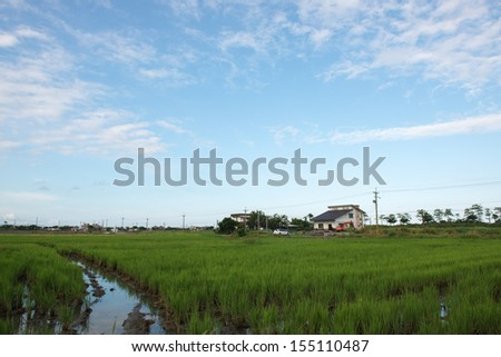 Rice field with blue sky, near sunset, YiLan, Taiwan.
