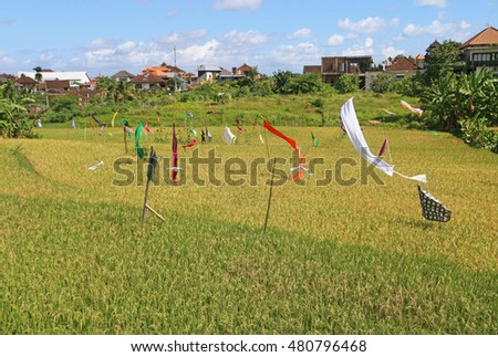 Rice field with colorful flags.