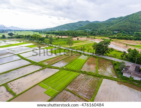 Rice field with road in countryside after rainy