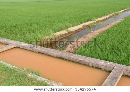 Rice Field With Water Supply Irrigation - stock photo
