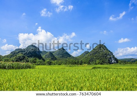 Rice fields and countryside scenery in summer.