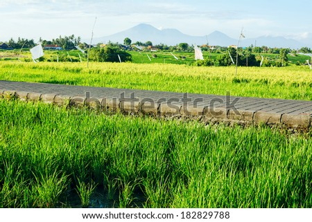 Rice fields and road with mountains on background (Bali, Indonesia) - stock photo
