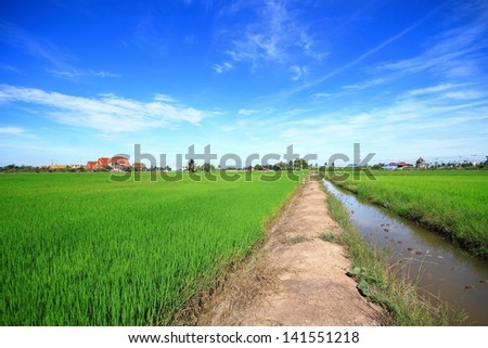Rice fields and temples in Nonthaburi, Thailand