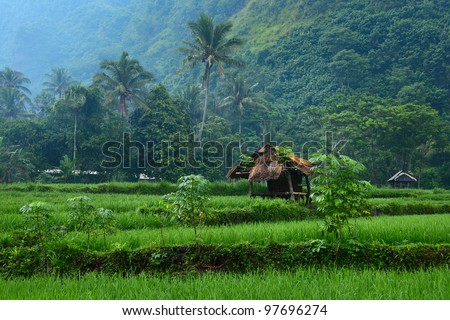 Rice fields and wooden building in mountain. Bali island - stock photo