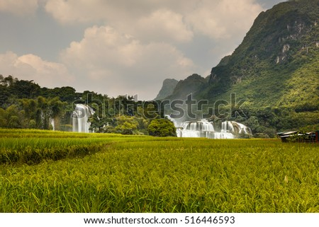 Rice fields at near Ban Gioc waterfalls ,Cao Bang ,Viet Nam . it's a famous location for travel