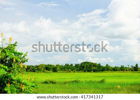 Rice fields in Songkhla Moung village in Southern Thailand during rain season:Select focus with shallow depth of field.