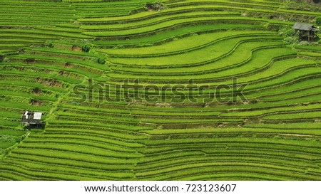 Rice fields in Vietnam.