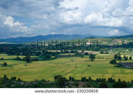 Rice fields of high angle - stock photo