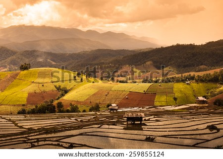 Rice fields on terraced.