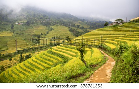 Rice fields on terraced in rainny season at SAPA, Lao Cai, Vietnam. Rice fields prepare for transplant at Northwest Vietnam Image