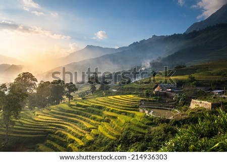 Rice fields on terraced in sunset at SAPA, Lao Cai, Vietnam. Rice fields prepare the harvest at Northwest Vietnam