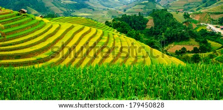 Rice fields on terraced of Mu Cang Chai, YenBai, Vietnam. Rice fields prepare the harvest at Northwest Vietnam - stock photo