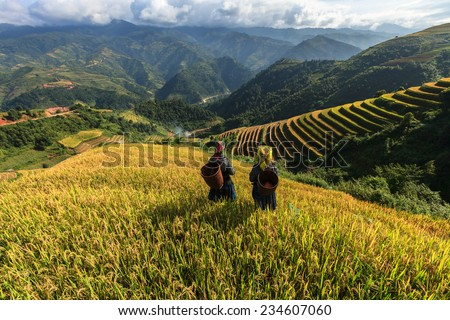 Rice fields on terraced of Mu Cang Chai, YenBai, Vietnam. Rice fields prepare the harvest at Northwest Vietnam - stock photo