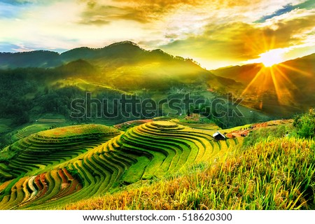 Rice fields on terraced of Mu Cang Chai, YenBai, Vietnam. Vietnam landscapes.