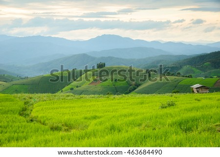Rice fields on terraced of Pa Pong Pieng , Mae Chaem, Chiang Mai, Thailand.