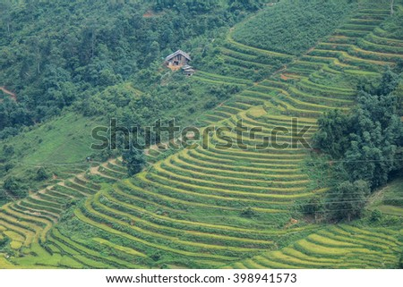 Rice fields on terraced of Sapa, Sapa District, Lao Cai Province, Northwest Vietnam
