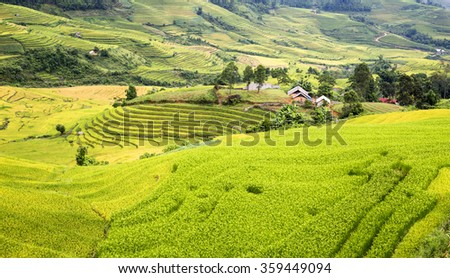 Rice fields on terraced of SAPA, Vietnam. Rice fields prepare the harvest at Northwest Vietnam. Soft focus.