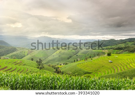 Rice fields on terraced, Terraced rice fields in northern Thailand
