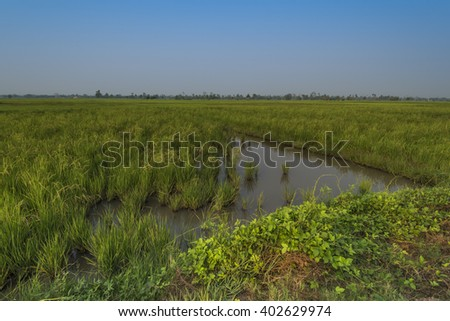 Rice fields paddy fields landscapes showing irrigation channels and aqueducts used for water transportation in times of drought.