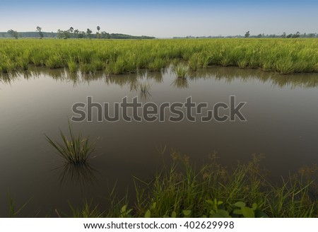 Rice fields paddy fields landscapes showing irrigation channels and aqueducts used for water transportation in times of drought. - stock photo