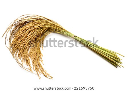 Rice grain isolated on white - stock photo