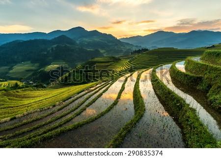 Rice Harvest Seasons at Mu Cang Chai , Vietnam - stock photo