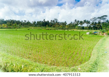 Rice paddies in valley, Bali, Indonesia