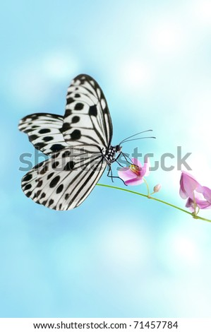Rice Paper Butterfly on pink flower, sky background - stock photo