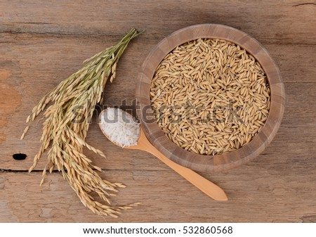 rice plants, grains of Thai jasmine rice in wood bowl