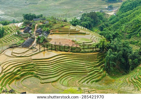 Rice rural field terraces at Sapa Vietnam.