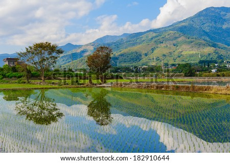 rice seedlings vegetate in water with dramatic sky reflection - stock photo