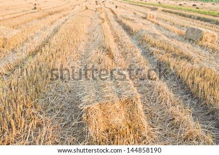 Rice straw - stock photo