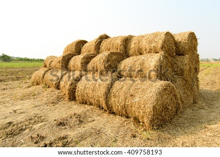 Rice straw roll on rice field