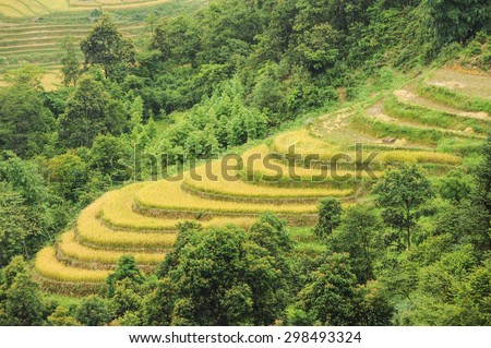 Rice terrace at Sapa,Vietnam.