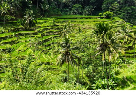 Rice terrace fields. Tegalalang, Ubud, Bali, Indonesia
