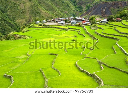 Rice terrace in Cordillera mountains, Philippines
