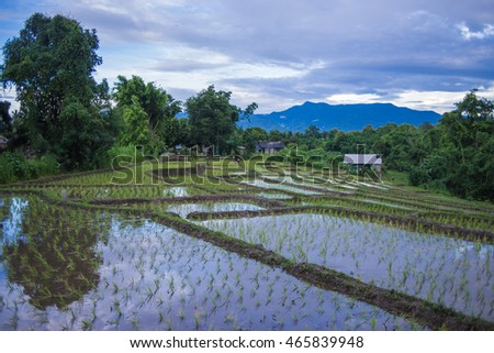 Rice terrace in mountains.