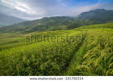 Rice terrace in Vietnam - stock photo