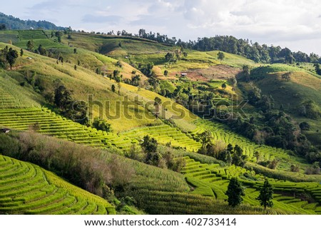 rice terrace on the mountain hill in Chiangmai