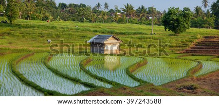 rice terrace with shack in Indonesia - stock photo