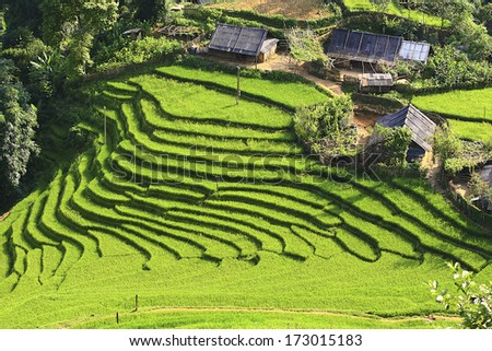 Rice terraces and house  on the mountain.