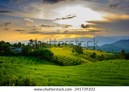 rice terraces at Chiangmai Thailand in sunset.