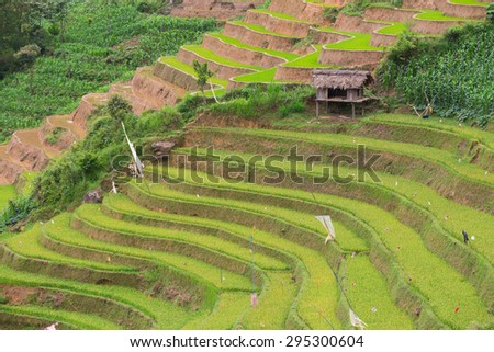 Rice terraces field with canal  in Mu Cang Chai , Vietnam